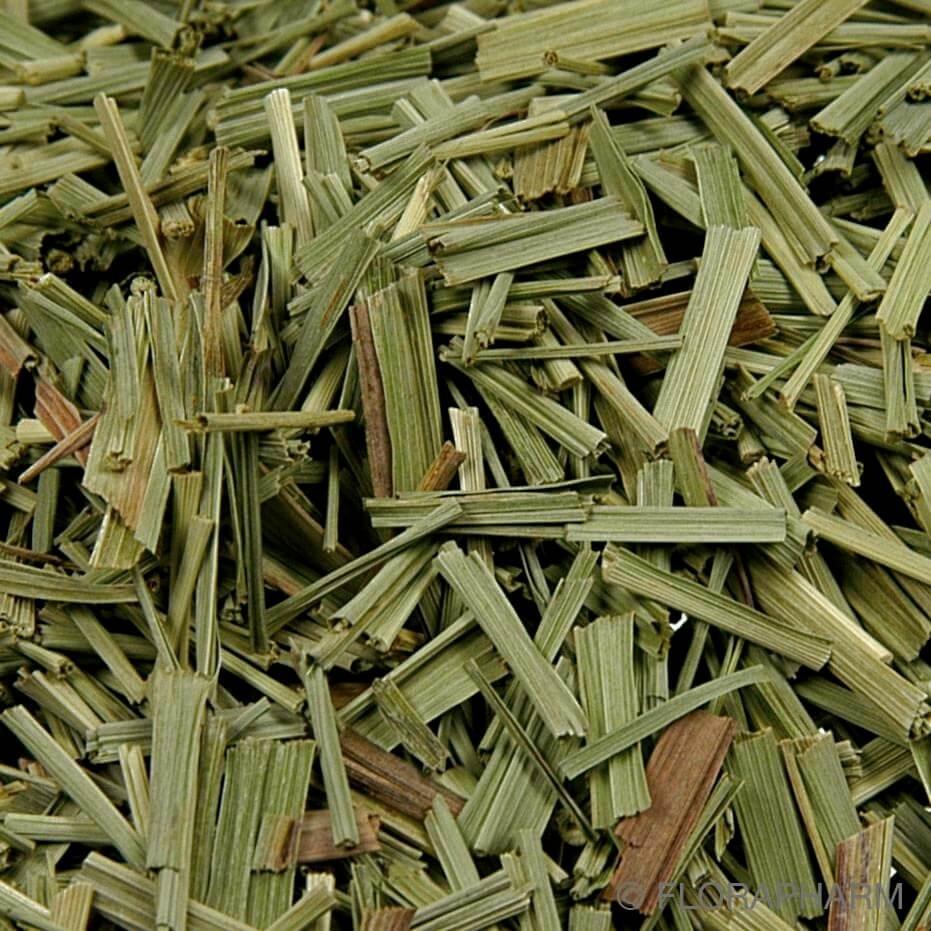 Lemongras geschnitten - Lemongrastee