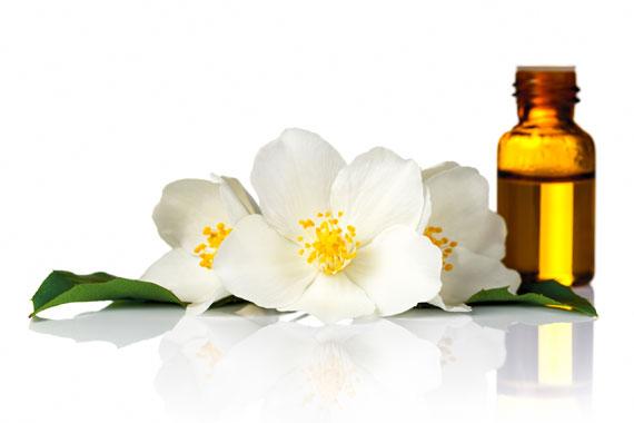 Jasmin - Blüten und Jasminöl